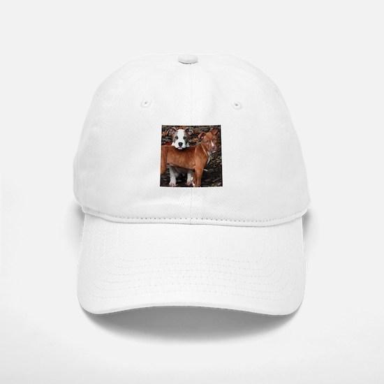Pit Bull Terriers Baseball Baseball Cap
