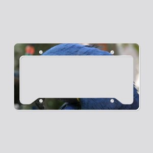 Hyacinth Macaw License Plate Holder