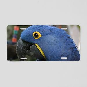 Hyacinth Macaw Aluminum License Plate