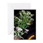 288 (2) - Copy Greeting Cards (Pk of 10)