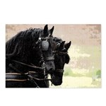 Postcards (Package of 8)-Friesians