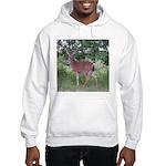 Doe in the Shade Hooded Sweatshirt