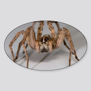 Wolf Spider Sticker (Oval)