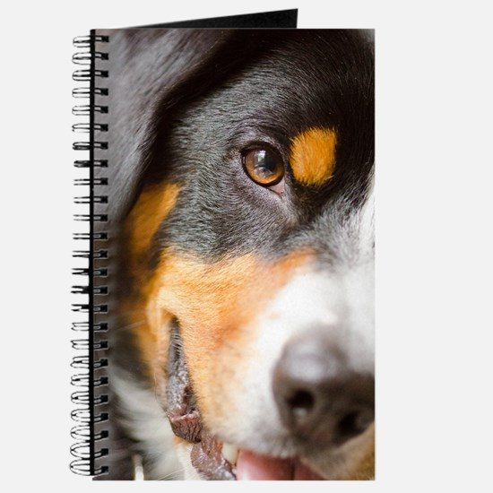I've got My Eye on You! Entlebucher Journal