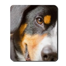 Entlebucher Mountain Dog Mousepad