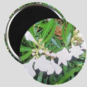 NAPLES FLOWERS Magnet