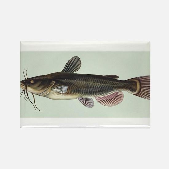 Catfish Magnets