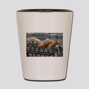 Squirrel resting laid out Shot Glass