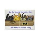 Rectangle Cats in a box Magnet