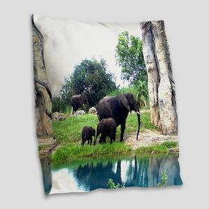 Following mom and love Animal Kingdom - Copy - C B