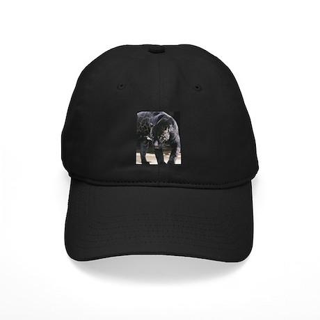 Animal - Jacquar Baseball Hat