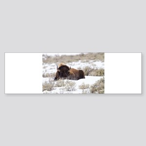 Bison Bumper Sticker