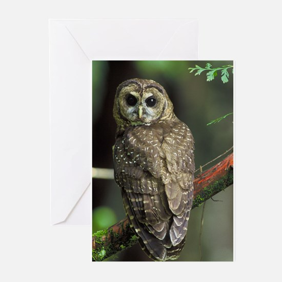 Northern Spotted Owl Greeting Cards