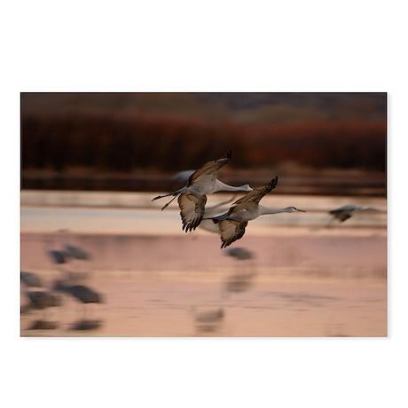 Sandhill cranes - Postcards (Package of 8)