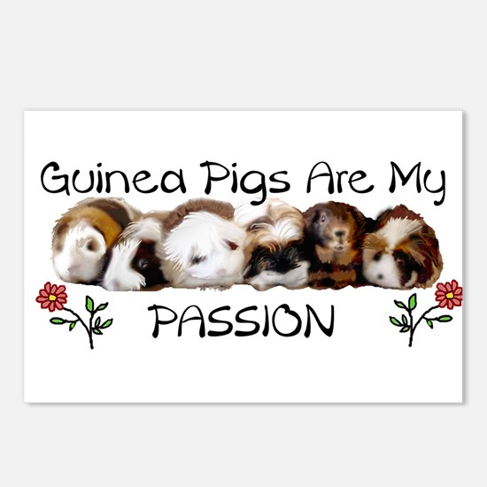 GUINEA PIG PASSION Postcards (Package of 8)