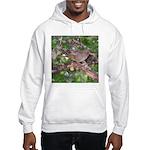 Towhee Hooded Sweatshirt