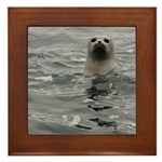 Harbor Seal Framed Tile