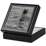 Harbor Seal Keepsake Box