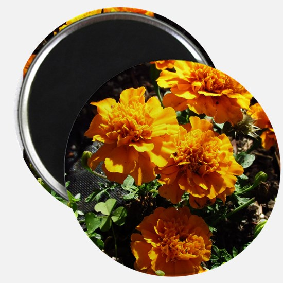 Autumn Marigolds Magnets