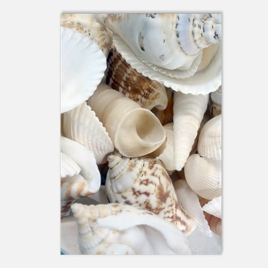 Beach Shells Assortment Postcards (Package of 8)