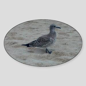 Shore Bird Sticker (Oval)