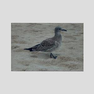 Shore Bird Rectangle Magnet