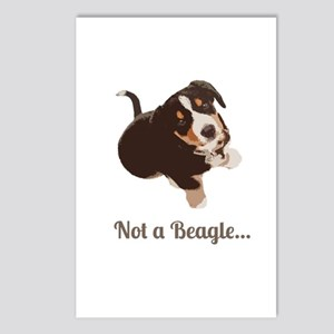 Not a Beagle - Entlebucher Mtn Dog Postcards (Pack
