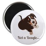 Not a Beagle - Entlebucher Mountain Dog Magnets