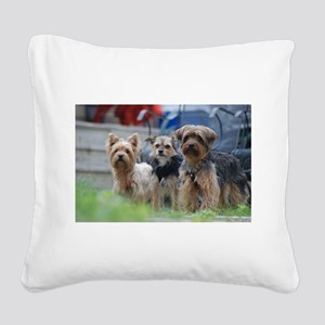 Morkie, Chorkie and Yorkie Square Canvas Pillow