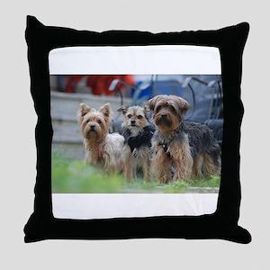Morkie, Chorkie and Yorkie Throw Pillow
