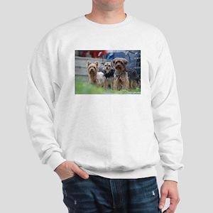 Morkie, Chorkie and Yorkie Sweatshirt