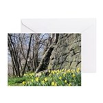 Spring Daffodils (Pk of 10)