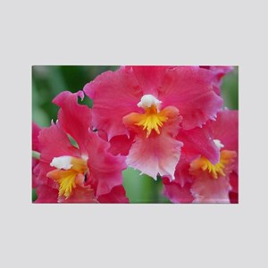 Pink Orchids Rectangle Magnet