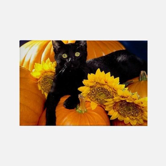 Halloween Cat Rectangle Magnet