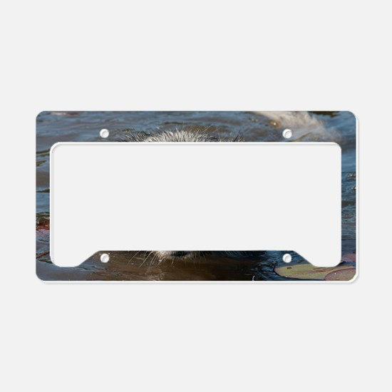 Blue Merl License Plate Holder
