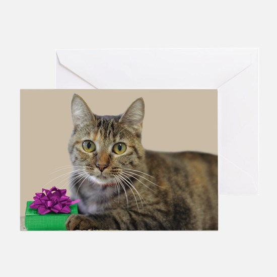 Cat with Gift Greeting Cards