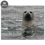 Harbor Seal Puzzle