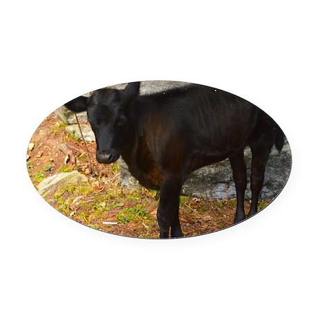 Vermont calf Oval Car Magnet