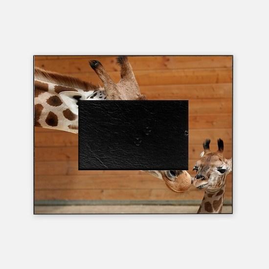 Kissing giraffes Picture Frame