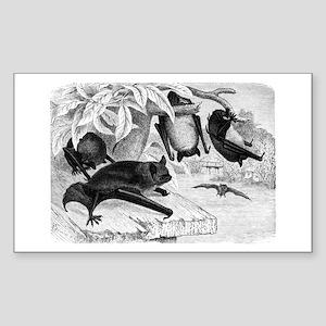 Daubenton's Bat Rectangle Sticker