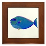Bignose Unicornfish Framed Tile