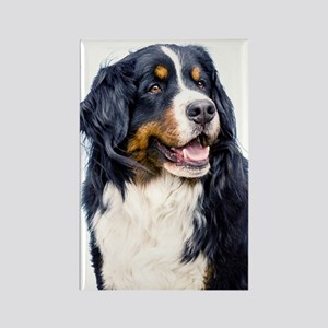 Bernese Mountain Dog Magnets