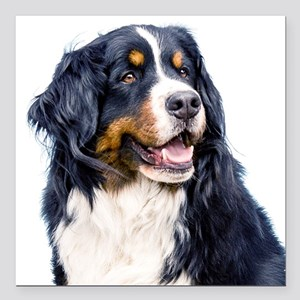 "Bernese Mountain Dog Square Car Magnet 3"" x 3"""