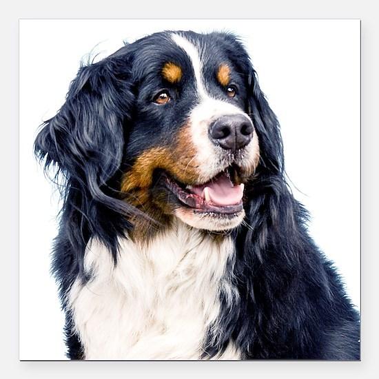 Dog Car Magnets Cafepress