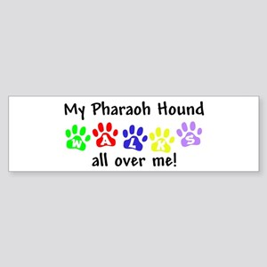 Pharaoh Hound Walks Bumper Sticker