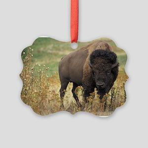 American buffalo Ornament