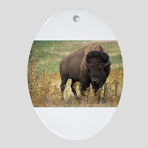 American buffalo Ornament (Oval)