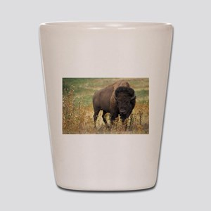 American buffalo Shot Glass