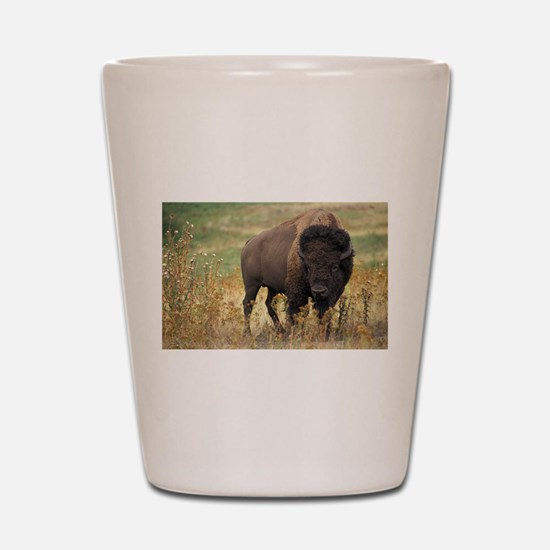 American buffalo Shot Glass