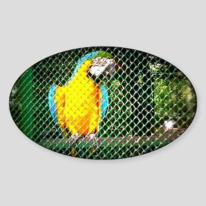 parrrot Sticker (Oval)